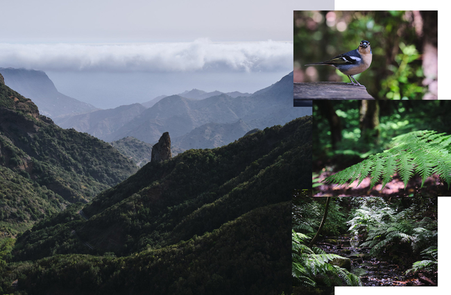 La Gomera Walking Canary Islands Hiking Adventure Dan WildeyDJWA2894 3648 Collage 1 Green